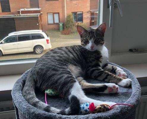 Een foto van de kat Charelle